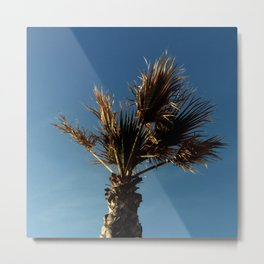 Palmetto in Lacanau-palms,drupe,sabal,swamp,cabbage,abanico,drupa,palmera Metal Print