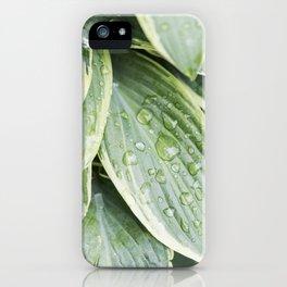 Hosta 1 iPhone Case