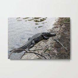 Eager Gator Metal Print