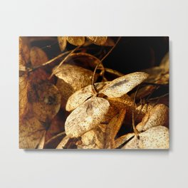 Autumn Hydrangea Metal Print