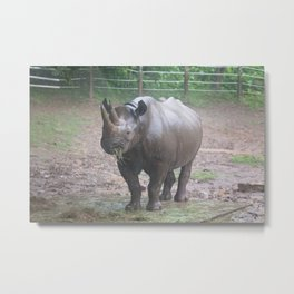 Lunch in the Rain Metal Print