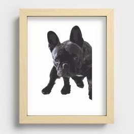 The guilty French Bulldog Recessed Framed Print