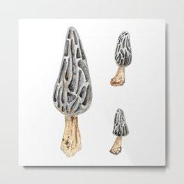 Hongo (Morchella conica) Metal Print