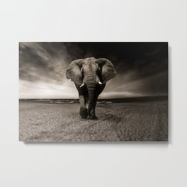 African Elephant Photographic Print Metal Print