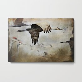 Sand Hill Cranes Metal Print