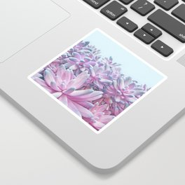 Sweet Succulents Sticker
