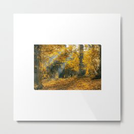 Exotic Afternoon Autumn leaves fall Metal Print