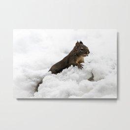Winter Squirrel II -  Cute Wildlife Animals Nature Photography Metal Print