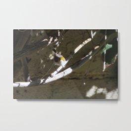 Small Verdin 2 Metal Print