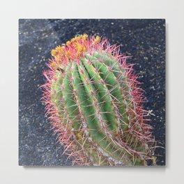 Fine Art Exquisitely Colorful Cactus Metal Print