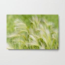 Foxtail Barley 2 Metal Print