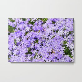 Lavender Flox Spring Floral  Metal Print