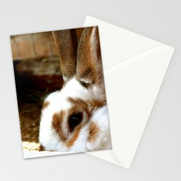 Bunny Look Out Stationery Cards