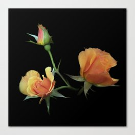 flowers on black - 3 orange rosebuds Canvas Print