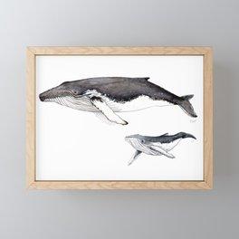 North Atlantic Humpback whale with calf Framed Mini Art Print