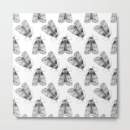 Moth Insect Pattern Pencil Drawing Metal Print