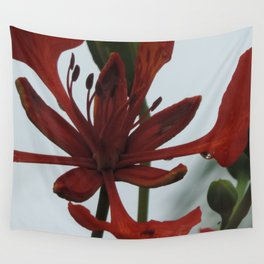Poinciana bloom Wall Tapestry
