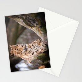 Sri Lankan Leopard Stationery Cards