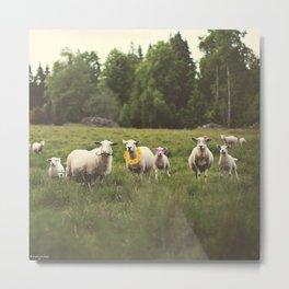 Sheep With Style II Metal Print
