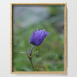 Lone Blue-Purple Anemone Serving Tray