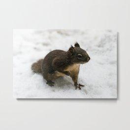 Winter Squirrel -  Cute Wildlife Animals Nature Photography Metal Print