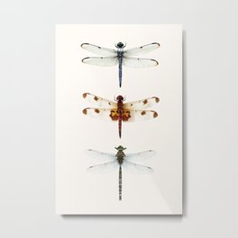 Dragonfly Collector Metal Print