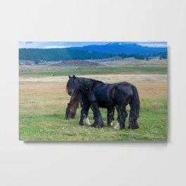 Gypsy Vanner Horses 0258 - Colorado Metal Print
