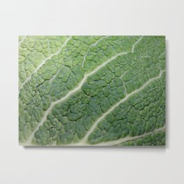 Cabbage Experiment Metal Print