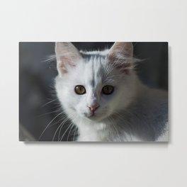 White Kitten Metal Print