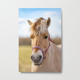 Image of young horse on the field Metal Print