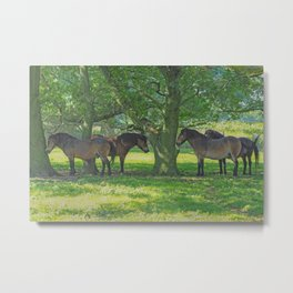 Sheltering from the Sun Metal Print