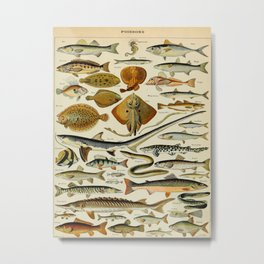 Fish Vintage Scientific Illustration French Language Encyclopedia Lithographs Educational Diagrams Metal Print