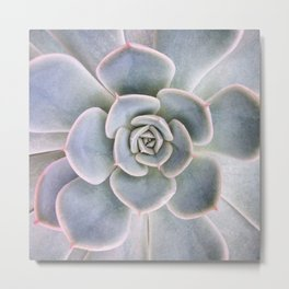 Nature Photography   Cactus Art   Pink and Blue Succulent   Plant   Botanical Metal Print