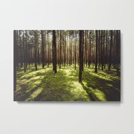 FOREST - Landscape and Nature Photography Metal Print