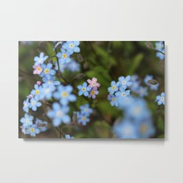 Pink and Blue Forget-Me-Nots 2 Metal Print
