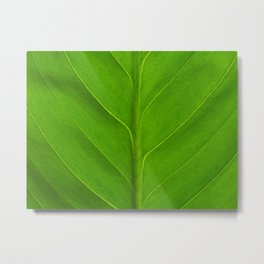 Green leaf background Metal Print
