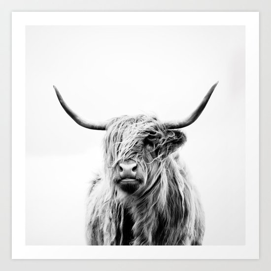 portrait of a highland cow by doritfuhg