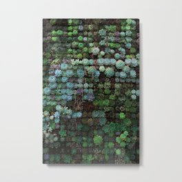 Succulents 1 Metal Print