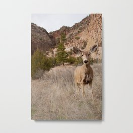 Close mule deer looking towards camera at Bandelier National Monument outside of Los Alamos, New Mexico Metal Print