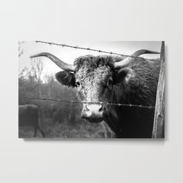 Highland Cow Longhorn Barbed Wire Fence Black and White Metal Print