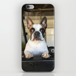 French Bull  Dog  Puppies iPhone Skin