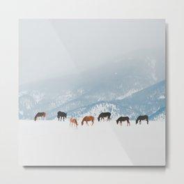 Winter Pastures Metal Print