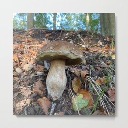 Mushroom In Forest Photo Metal Print