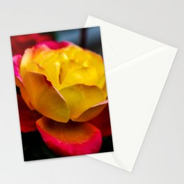 Rainbow Of Color Stationery Cards
