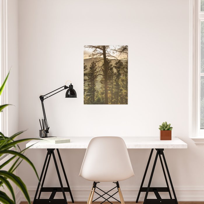 Mountain Forest New Mexico - Nature Photography Poster