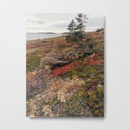 fall forage  Metal Print