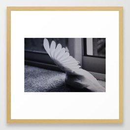 Dove Wing Framed Art Print