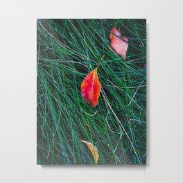 closeup orange leaves on the green grass field Metal Print
