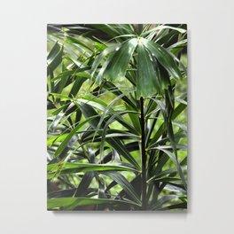 Foxtail palm Metal Print