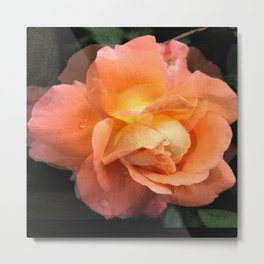 Rose With Dew Abstract Metal Print